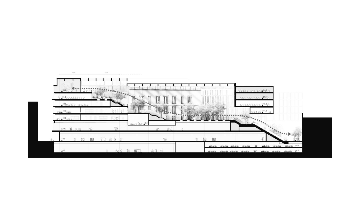 section-web.jpg